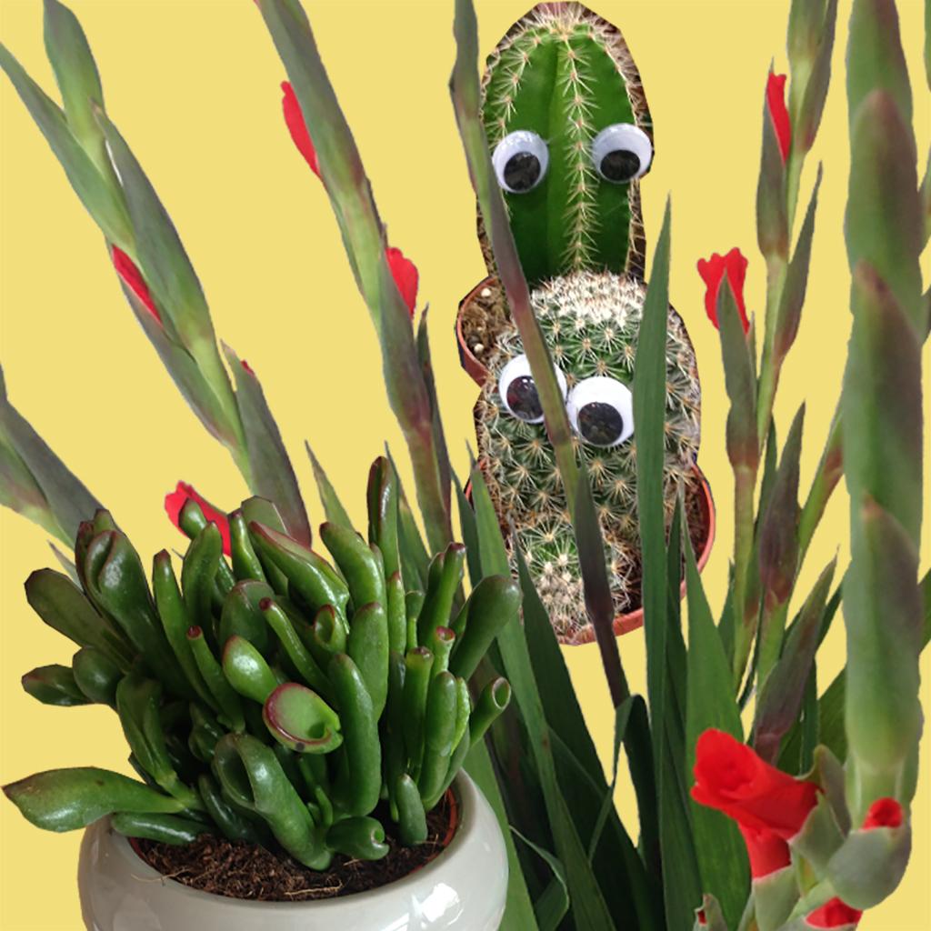 Pflanzenliebe // Der grüne Daumen
