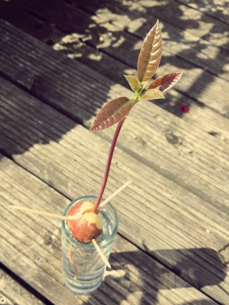 Pflanzenliebe // Dieser Kern ist bereit, eingepflanzt zu werden