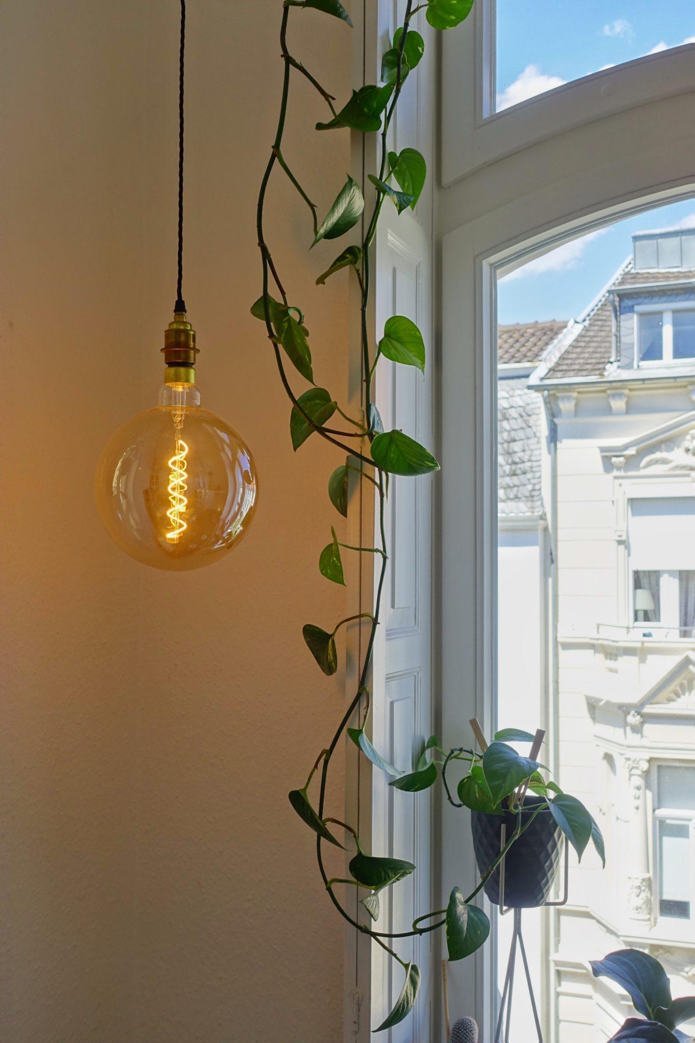 Glühbirne neben Kletter-Philodendron