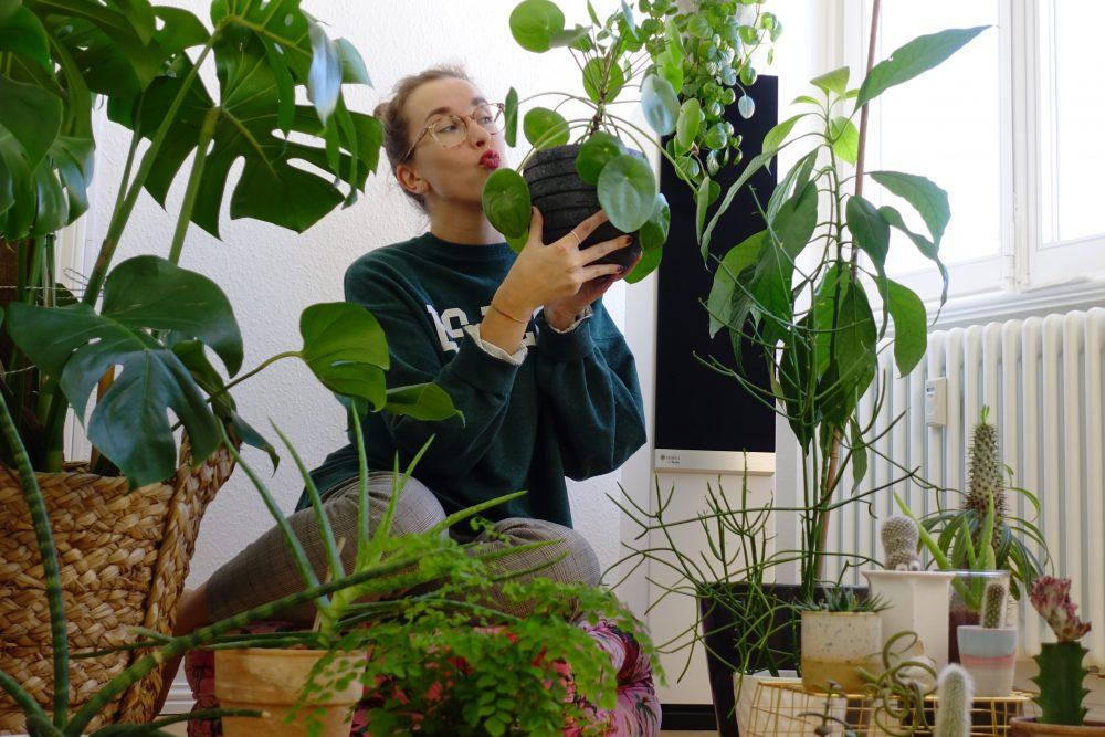 Zimmerpflanzen Gruppe 2
