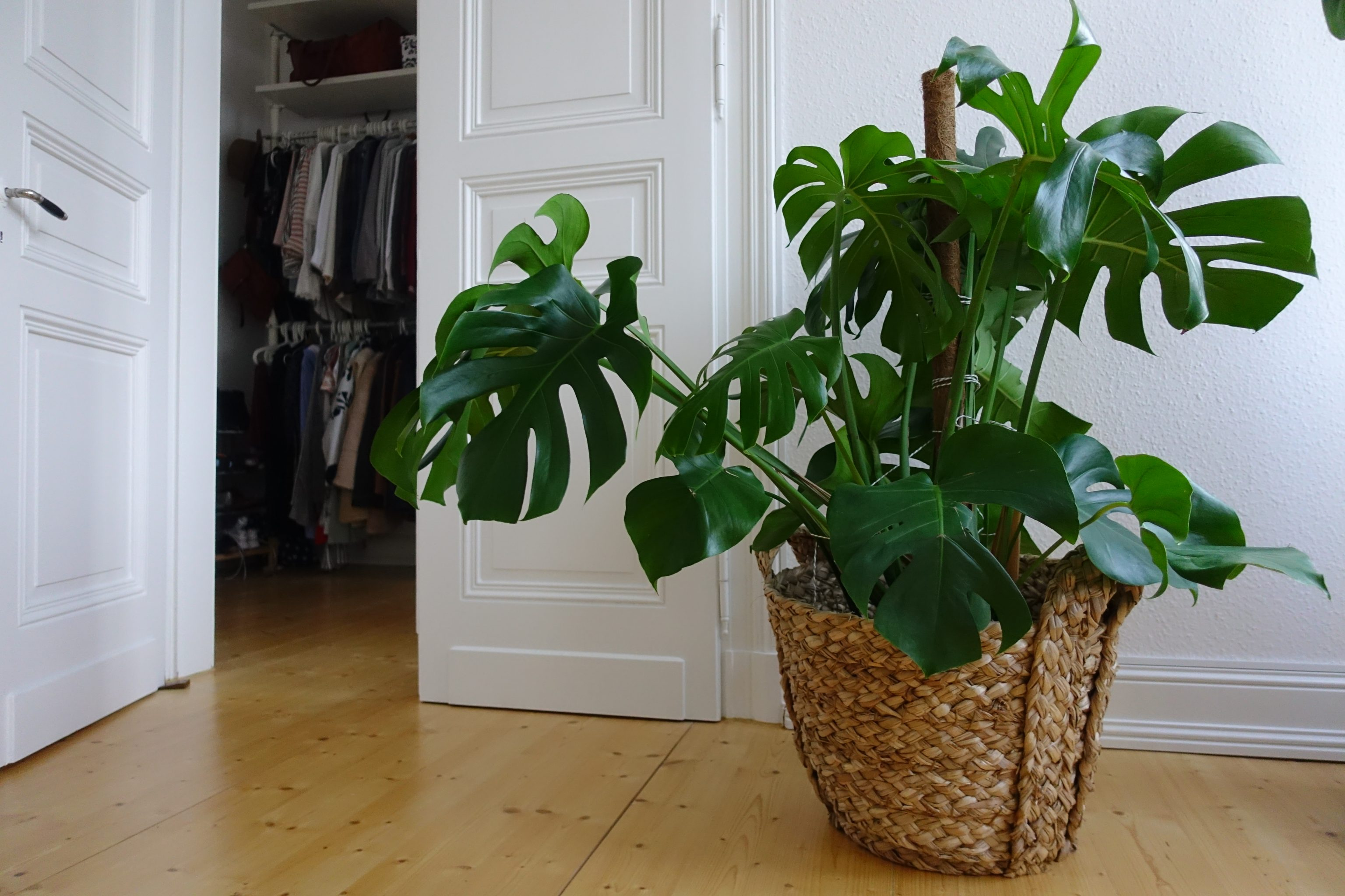 Prächtig Pflanzenliebe // Meine liebsten Zimmerpflanzen | &another.one &FC_38